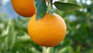 naranjas_alemania
