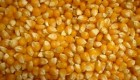 Para la Bolsa de Rosario la estimación de producción de maíz es de 2 millones de toneladas por las lluvias