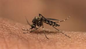 dengue zeenews