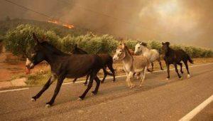 Incendio en San Luis