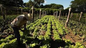agricultura-familair