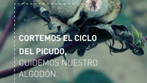17-06-09_cci_placa_picudo_algodonero