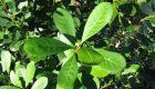 Mayor trazabilidad para las plantas de Especies Nativas y las semillas de la Yerba Mate